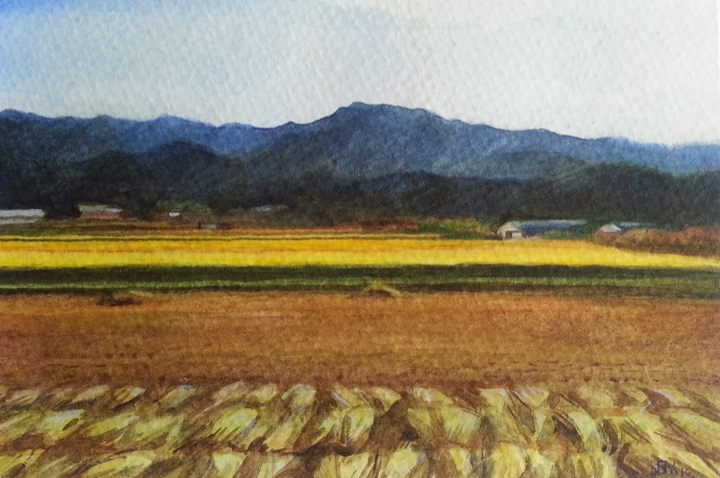 Postcard from Korea: Golden Fields
